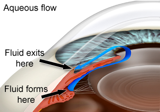 Aqueous flow in the eye in glaucoma