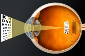 Patient information eye doctor in Tampa