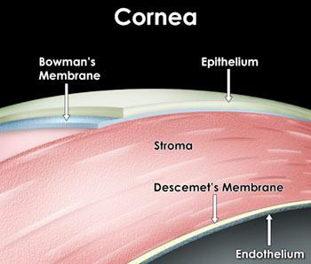 DMEK cornea eye surgery